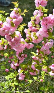 Hints of Spring Whisper Change